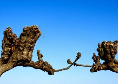 """Juni 19 - Baumskulpturen - Hartmut Löhn - Thema """"Pflanzen"""""""