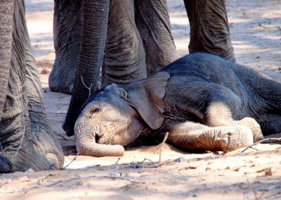 Elefantenbaby in Namibia