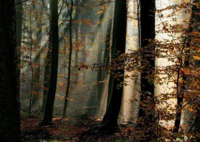 Strahlender Schatten