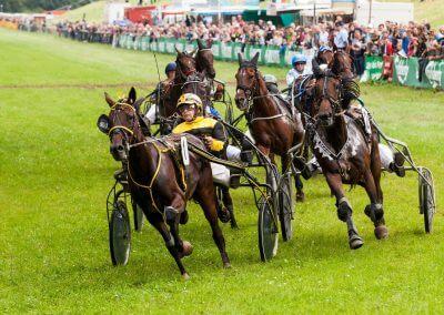 Pferdesport - Siegmund Markwart