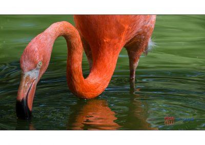 Flamingo 16 - Damir Markovic