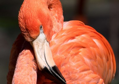 Flamingo - Bettina Fulfs