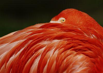 Flamingo Eye - Haiko Römisch