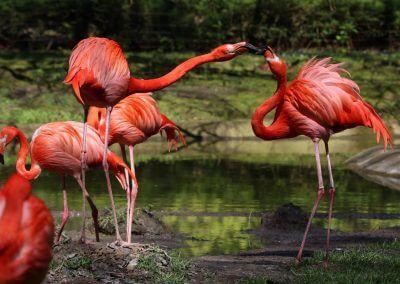 Flamingo - Horst Wabner