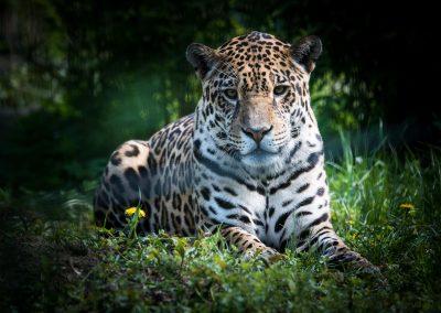Gepard - Bettina Fulfs